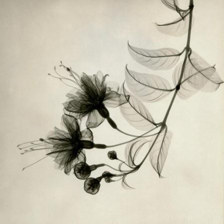 Radiografia florilor