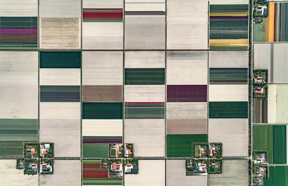 fotografii-aeriene-bernhard-lang-lanuri-de-lalele-tulip-fields-17