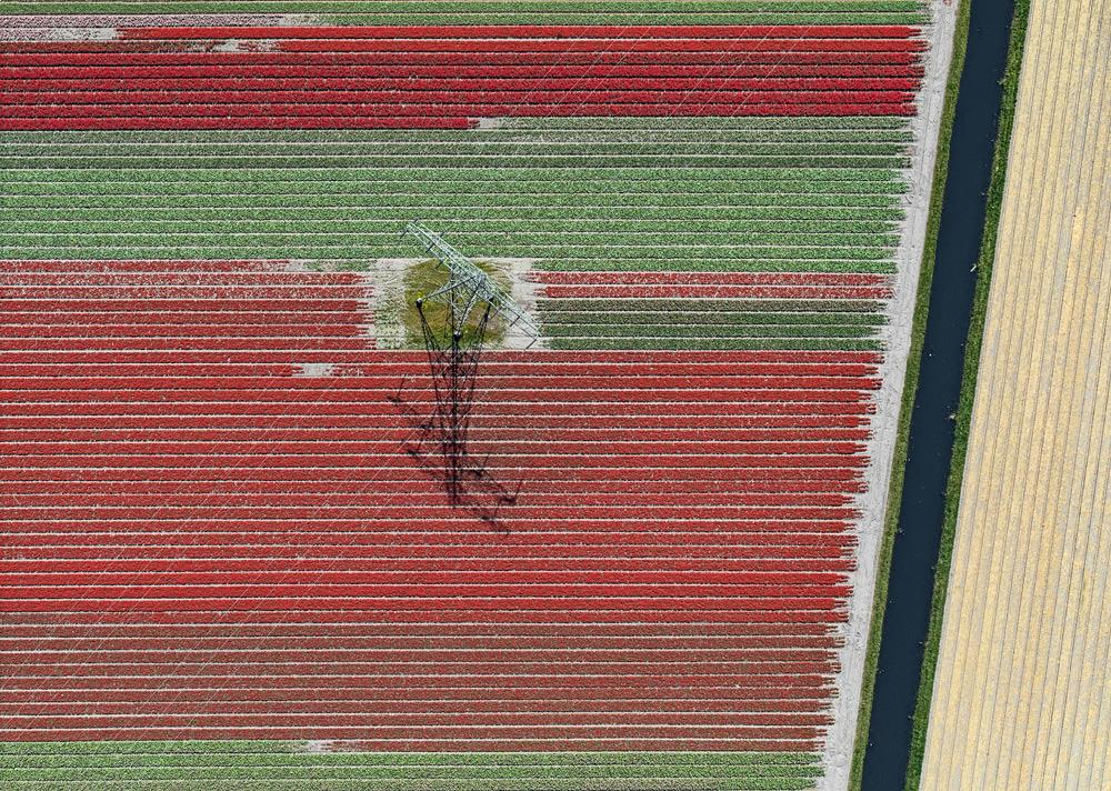 fotografii-aeriene-bernhard-lang-lanuri-de-lalele-tulip-fields-8
