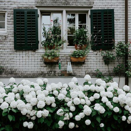 Cu flori la fereastra